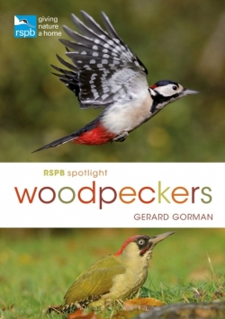 Spotlight Woodpeckers Gorman